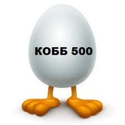Инкубационное яйцо кур несушек,  бройлеров и других пород птицы